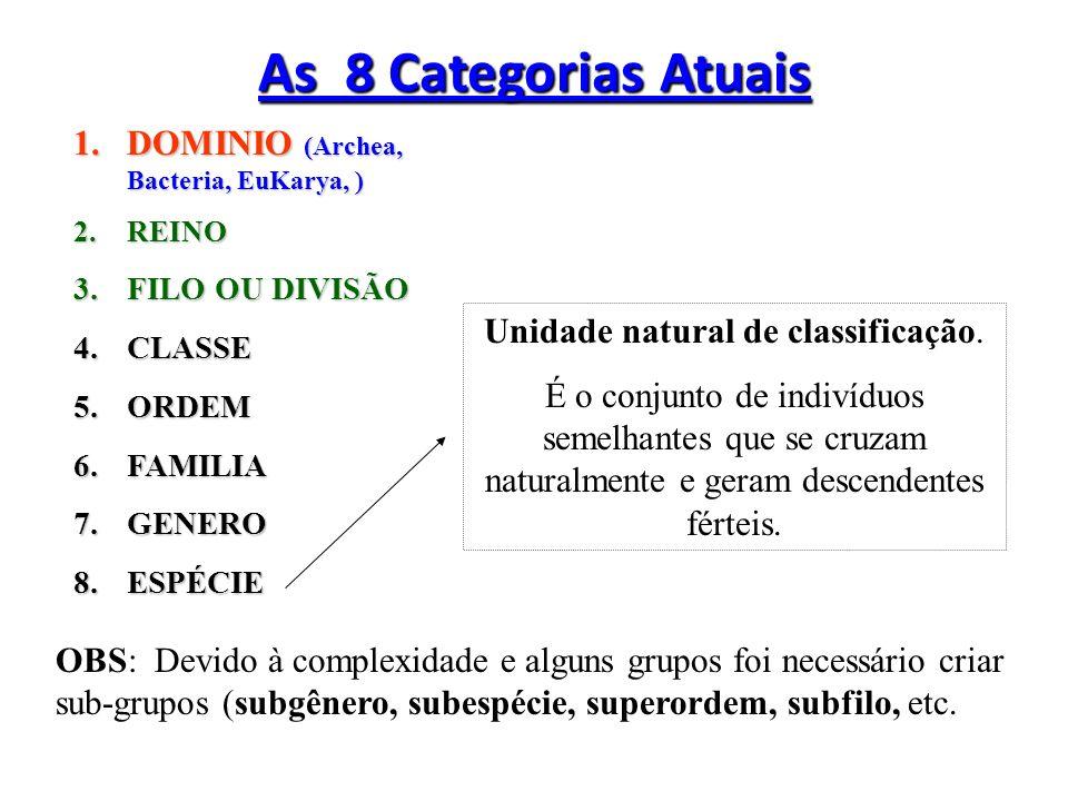 Eukarya Eukarya: No âmbito microbiológico, ompreende as algas eucariontes, protozoários, fungos, plantas e animais.