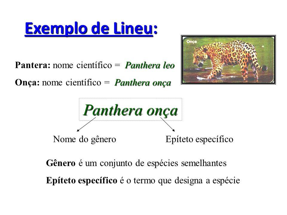 Exemplo de Lineu: Panthera leo Pantera: nome científico = Panthera leo Panthera onça Onça: nome científico = Panthera onça Panthera onça Nome do gêner