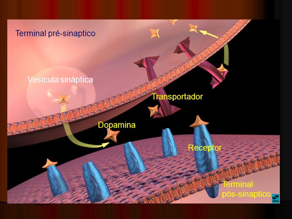 Dopamina Receptor Vesícula sináptica Transportador Terminal pré-sinaptico Terminal pós-sinaptico