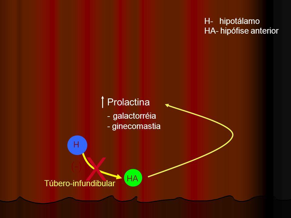 H HA Túbero-infundibular H- hipotálamo HA- hipófise anterior X Prolactina - galactorréia - ginecomastia (-)