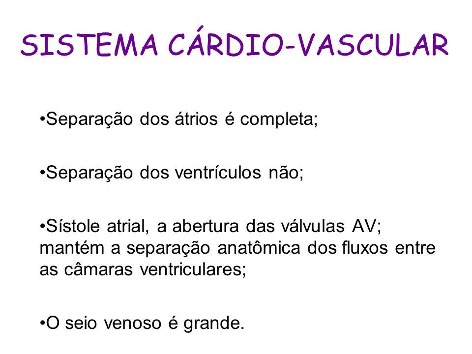 SISTEMA CÁRDIO-VASCULAR Separação dos átrios é completa; Separação dos ventrículos não; Sístole atrial, a abertura das válvulas AV; mantém a separação