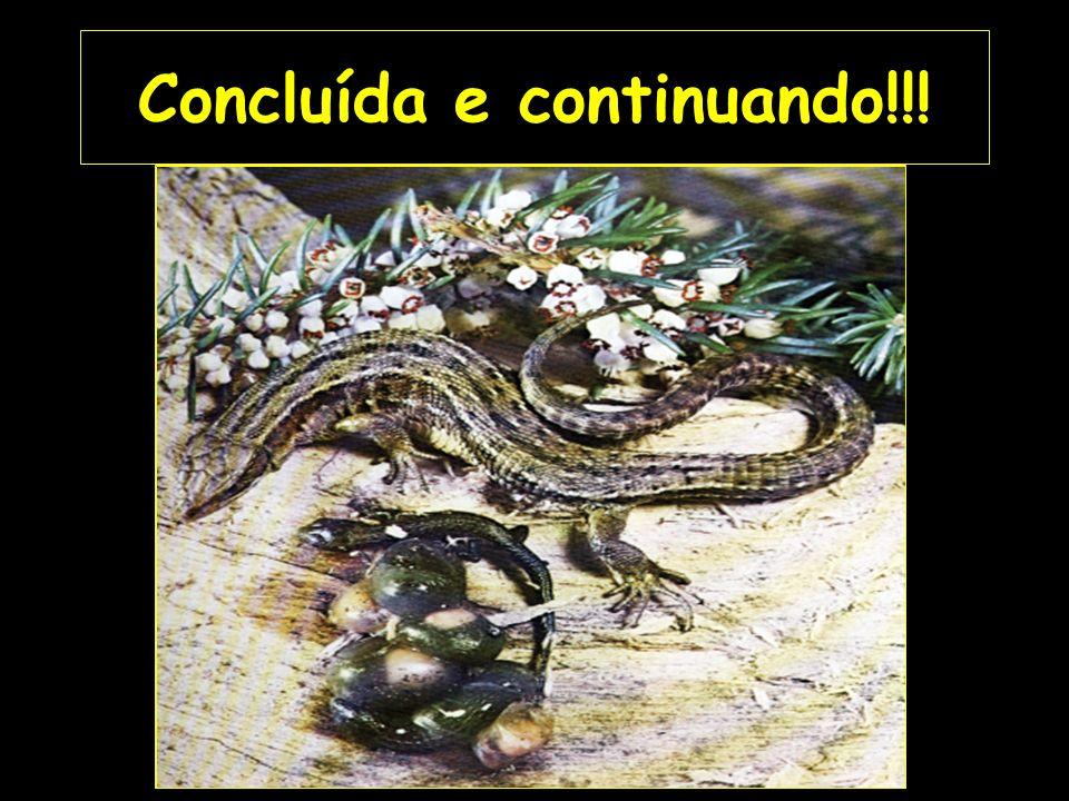 CLASSIFICAÇÃO: REPTILIA Evoluíram dos labirintodontes Possuem escamas córneas recobrindo o corpo Possuem garras, exceto serpentes Possuem costelas para sugar o ar para dentro dos pulmões Possuem parentesco direto com todas as outras classes