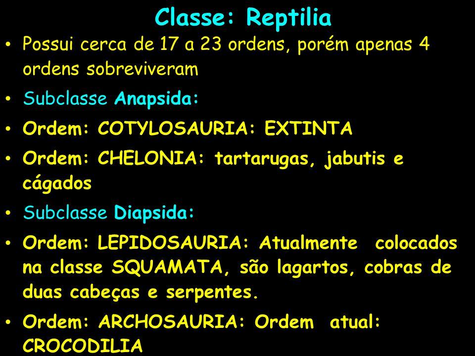 Classe: Reptilia Possui cerca de 17 a 23 ordens, porém apenas 4 ordens sobreviveram Subclasse Anapsida: Ordem: COTYLOSAURIA: EXTINTA Ordem: CHELONIA: