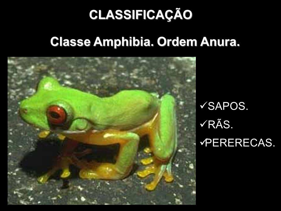 CLASSIFICAÇÃO Classe Amphibia. Ordem Anura. SAPOS. RÃS. PERERECAS.