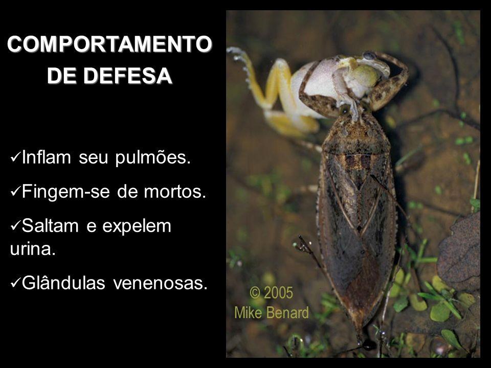COMPORTAMENTO DE DEFESA Inflam seu pulmões. Fingem-se de mortos. Saltam e expelem urina. Glândulas venenosas.