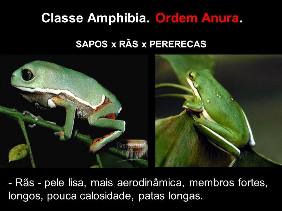 Classe Amphibia.Ordem Anura.