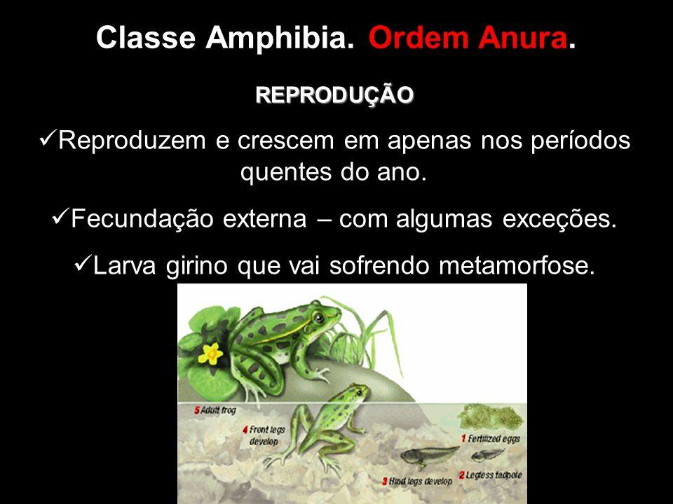 Classe Amphibia. Ordem Anura. REPRODUÇÃO Reproduzem e crescem em apenas nos períodos quentes do ano. Fecundação externa – com algumas exceções. Larva