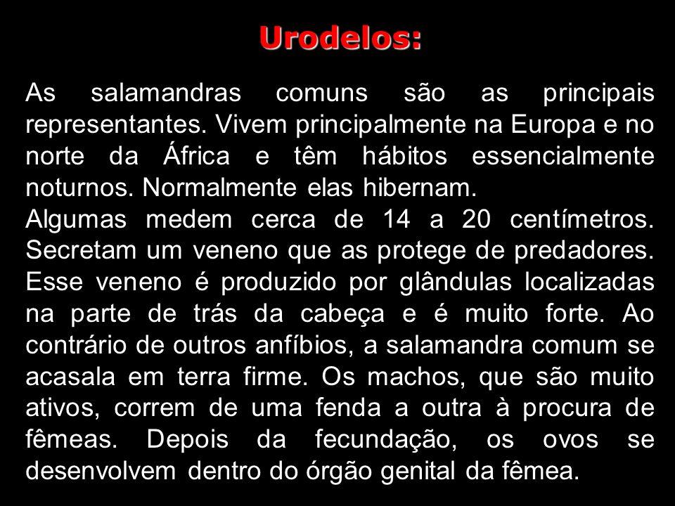 Urodelos: As salamandras comuns são as principais representantes.