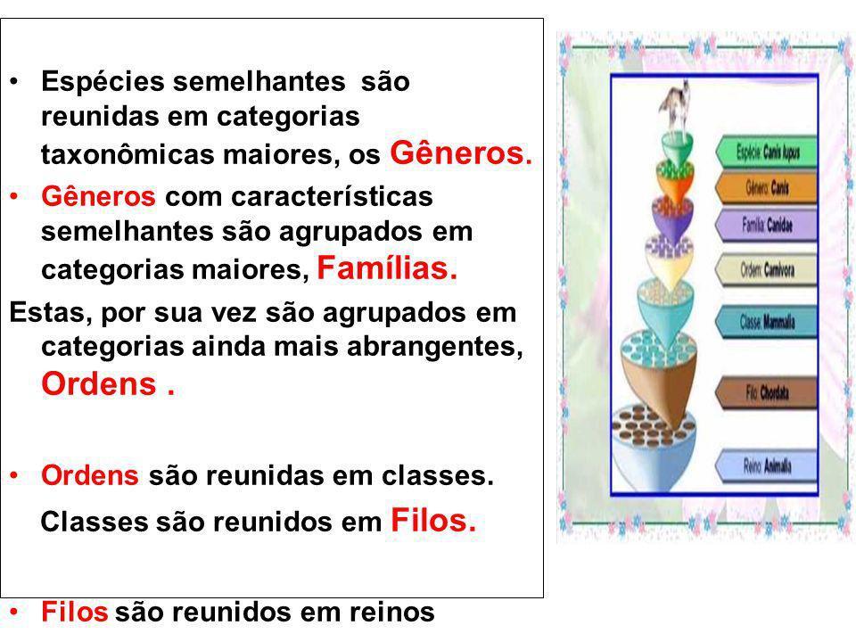 Espécies semelhantes são reunidas em categorias taxonômicas maiores, os Gêneros. Gêneros com características semelhantes são agrupados em categorias m
