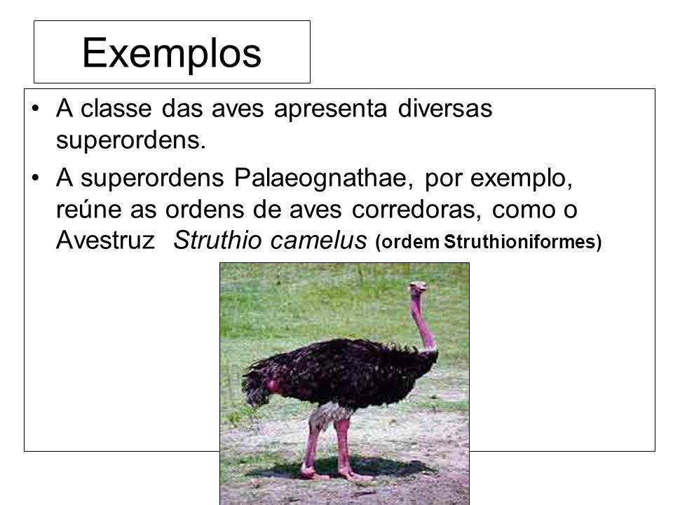 Exemplos A classe das aves apresenta diversas superordens. A superordens Palaeognathae, por exemplo, reúne as ordens de aves corredoras, como o Avestr