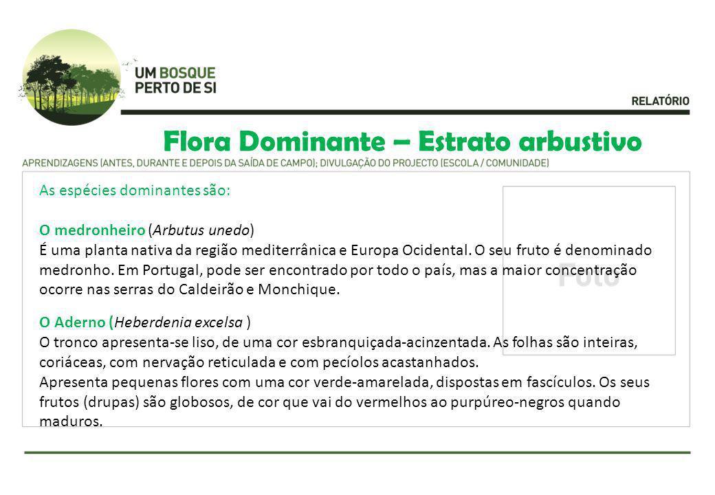 Flora Dominante – Estrato arbustivo As espécies dominantes são: O medronheiro (Arbutus unedo) É uma planta nativa da região mediterrânica e Europa Oci