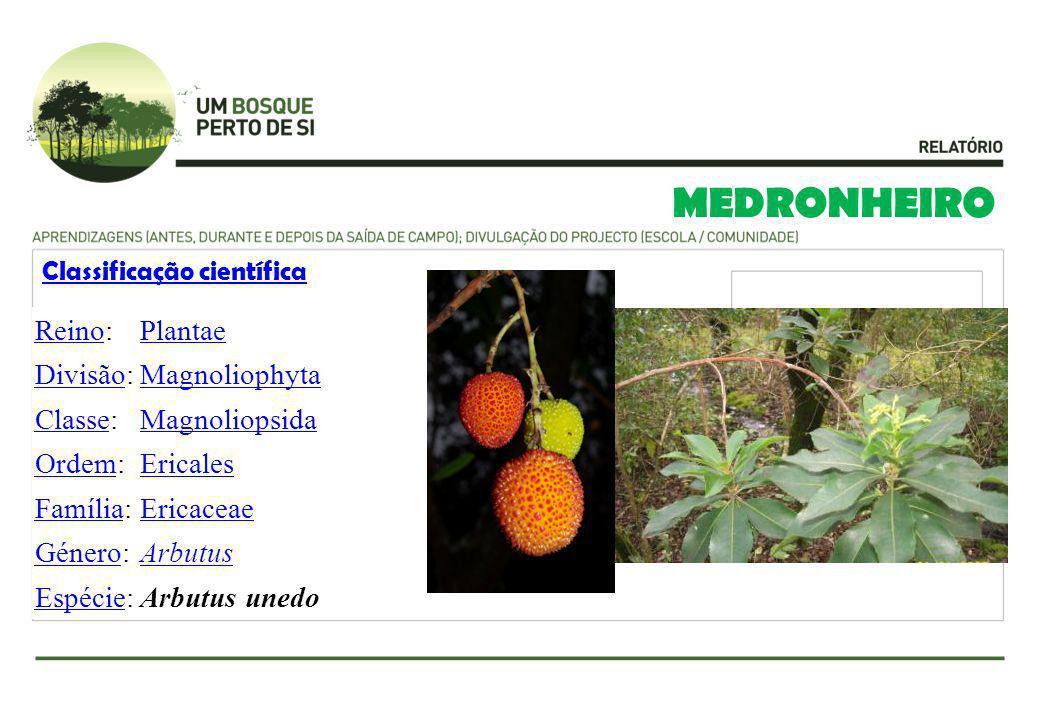 MEDRONHEIRO Classificação científica ReinoReino:Plantae DivisãoDivisão:Magnoliophyta ClasseClasse:Magnoliopsida OrdemOrdem:Ericales FamíliaFamília:Eri