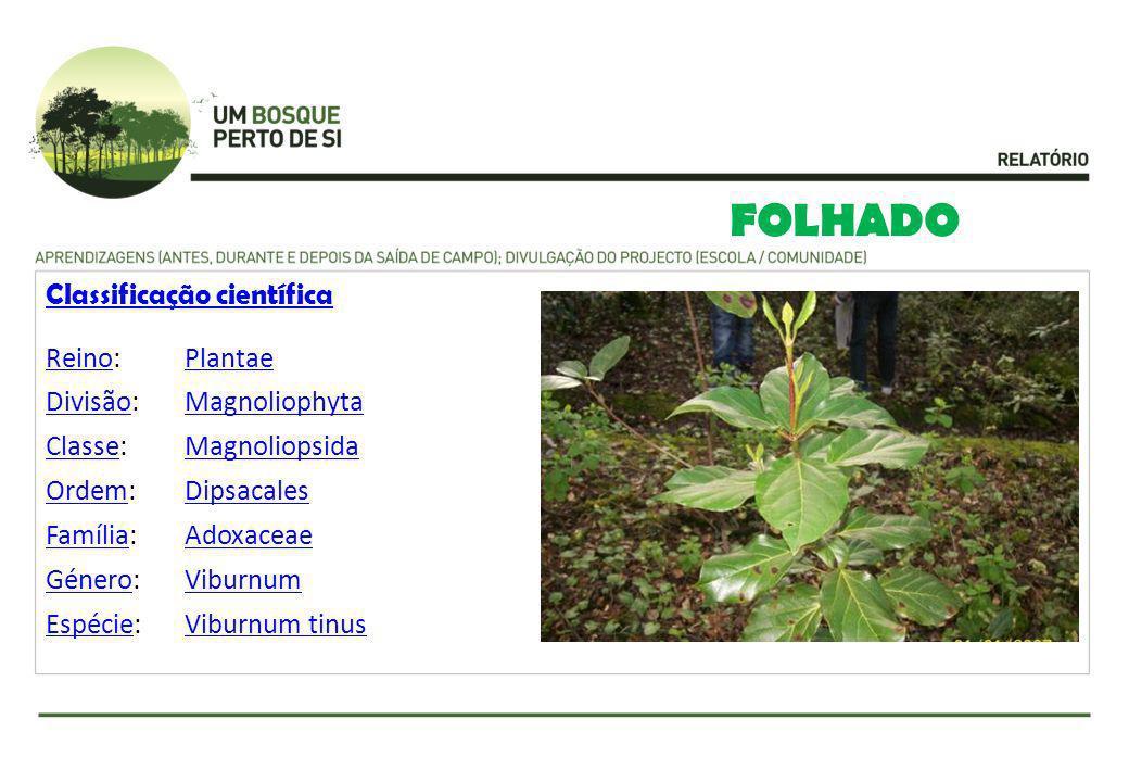 FOLHADO Classificação científica ReinoReino:Plantae DivisãoDivisão:Magnoliophyta ClasseClasse:Magnoliopsida OrdemOrdem:Dipsacales FamíliaFamília:Adoxa