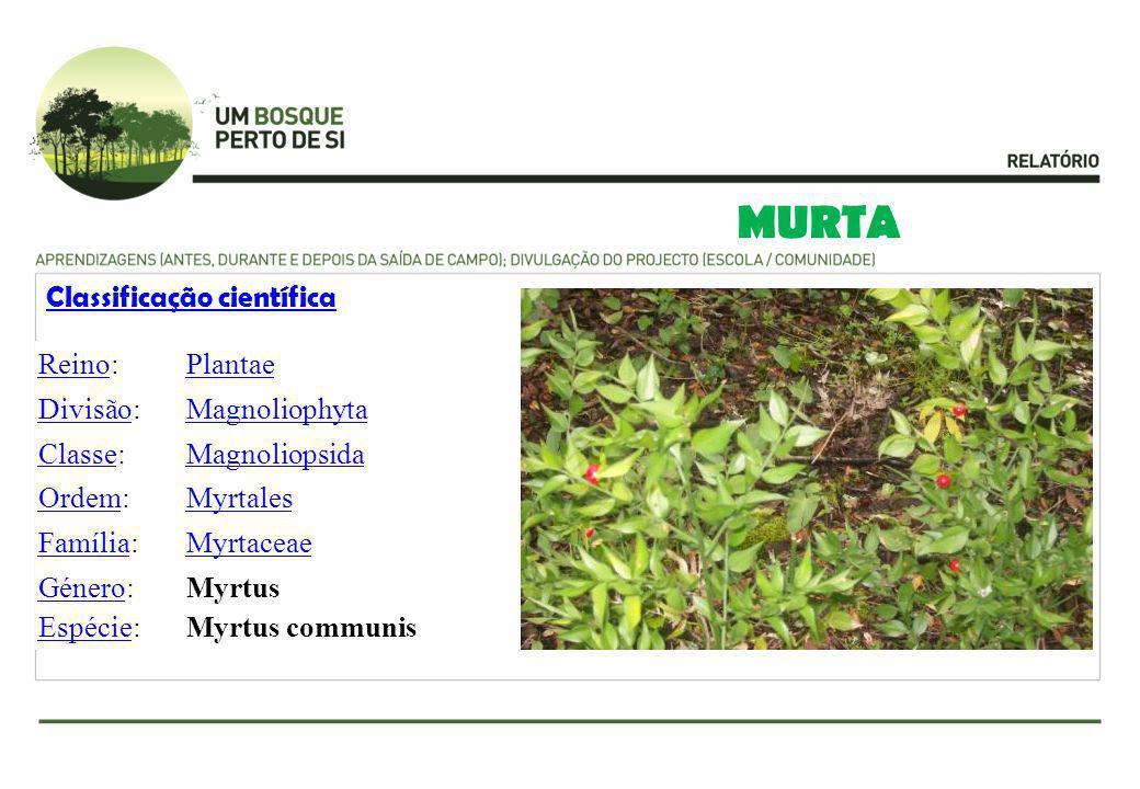 MURTA Classificação científica ReinoReino:Plantae DivisãoDivisão:Magnoliophyta ClasseClasse:Magnoliopsida OrdemOrdem:Myrtales FamíliaFamília:Myrtaceae