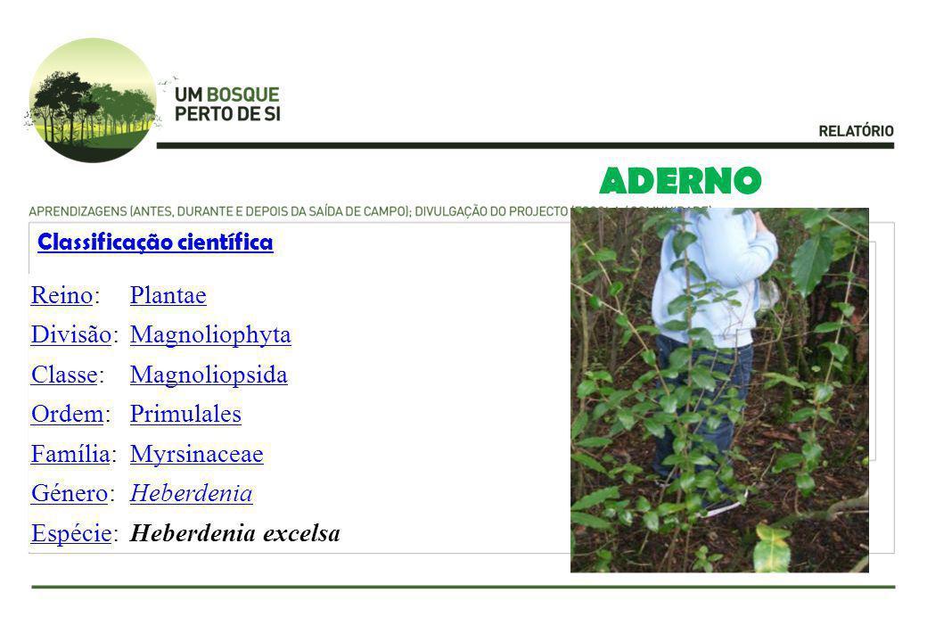 ADERNO Classificação científica ReinoReino:Plantae DivisãoDivisão:Magnoliophyta ClasseClasse:Magnoliopsida OrdemOrdem:Primulales FamíliaFamília:Myrsin