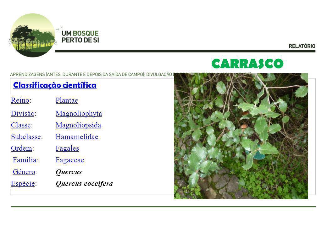 CARRASCO Classificação científica ReinoReino:Plantae DivisãoDivisão:Magnoliophyta ClasseClasse:Magnoliopsida SubclasseSubclasse:Hamamelidae OrdemOrdem