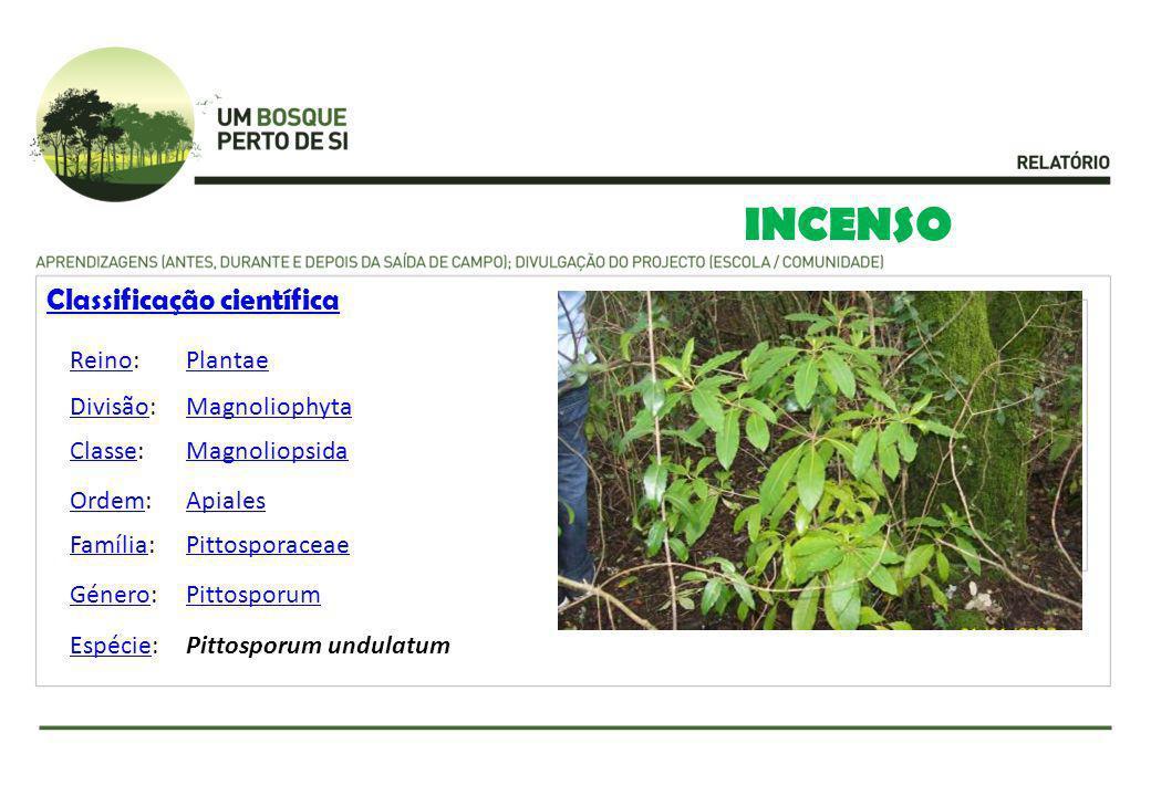 INCENSO Classificação científica ReinoReino:Plantae DivisãoDivisão:Magnoliophyta ClasseClasse:Magnoliopsida OrdemOrdem:Apiales FamíliaFamília:Pittospo