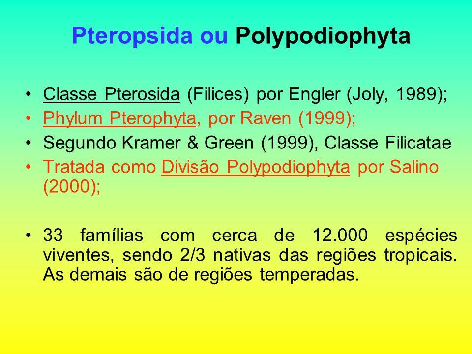 Pteropsida ou Polypodiophyta Classe Pterosida (Filices) por Engler (Joly, 1989); Phylum Pterophyta, por Raven (1999); Segundo Kramer & Green (1999), Classe Filicatae Tratada como Divisão Polypodiophyta por Salino (2000); 33 famílias com cerca de 12.000 espécies viventes, sendo 2/3 nativas das regiões tropicais.