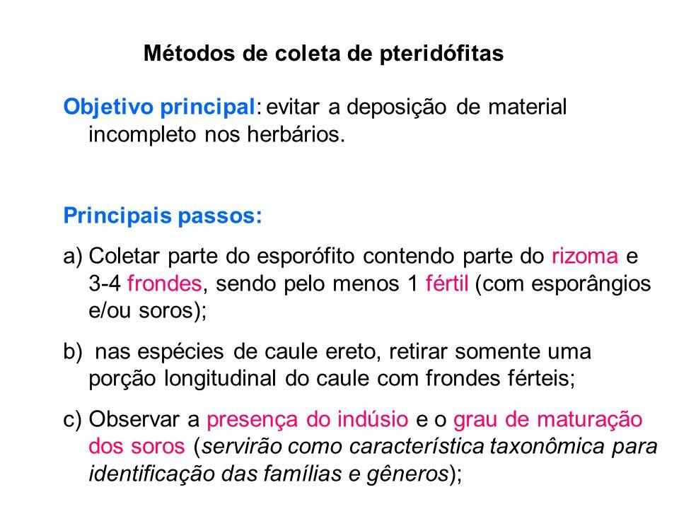 Métodos de coleta de pteridófitas Objetivo principal: evitar a deposição de material incompleto nos herbários.