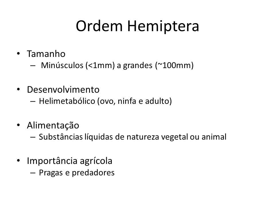 Ordem Hemiptera Tamanho – Minúsculos (<1mm) a grandes (~100mm) Desenvolvimento – Helimetabólico (ovo, ninfa e adulto) Alimentação – Substâncias líquid