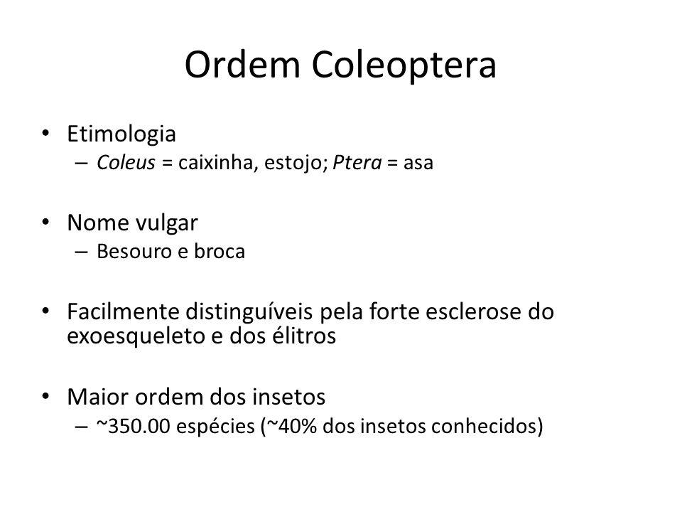 Ordem Coleoptera Etimologia – Coleus = caixinha, estojo; Ptera = asa Nome vulgar – Besouro e broca Facilmente distinguíveis pela forte esclerose do ex