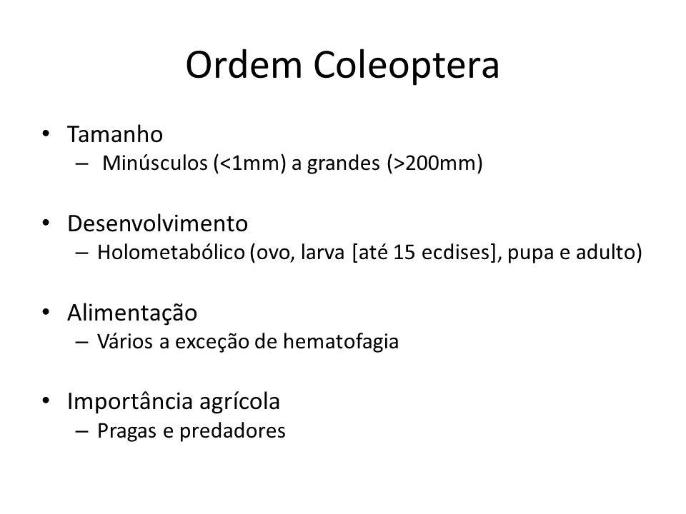 Ordem Coleoptera Tamanho – Minúsculos ( 200mm) Desenvolvimento – Holometabólico (ovo, larva [até 15 ecdises], pupa e adulto) Alimentação – Vários a ex