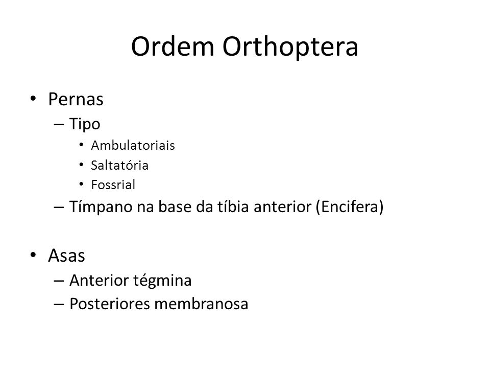Ordem Orthoptera Pernas – Tipo Ambulatoriais Saltatória Fossrial – Tímpano na base da tíbia anterior (Encifera) Asas – Anterior tégmina – Posteriores