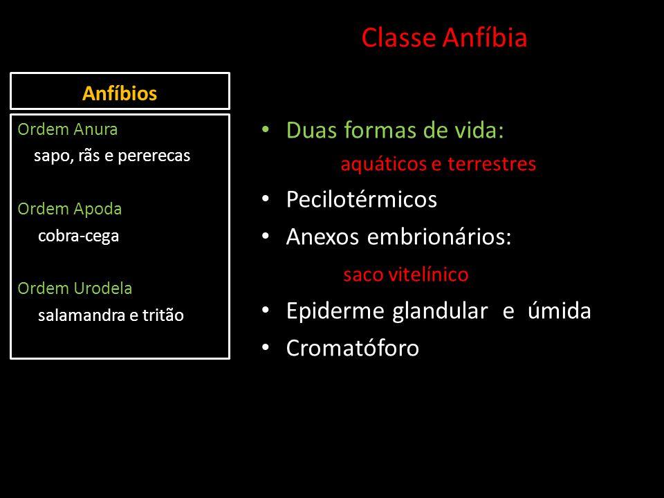 Anfíbios Classe Anfíbia Duas formas de vida: aquáticos e terrestres Pecilotérmicos Anexos embrionários: saco vitelínico Epiderme glandular e úmida Cro