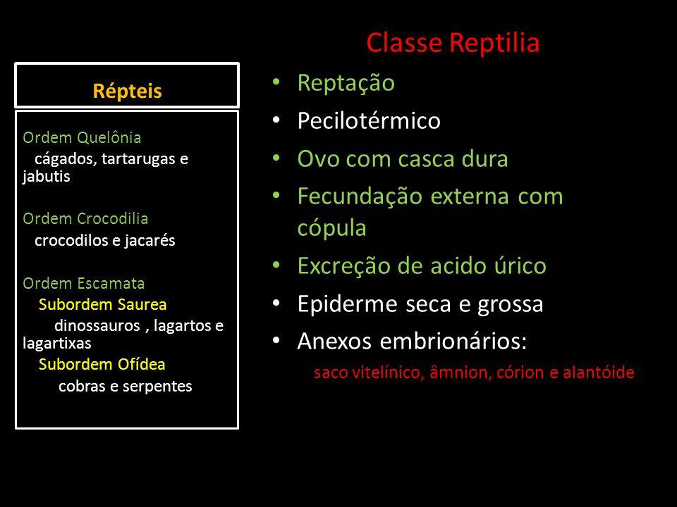 Répteis Classe Reptilia Reptação Pecilotérmico Ovo com casca dura Fecundação externa com cópula Excreção de acido úrico Epiderme seca e grossa Anexos