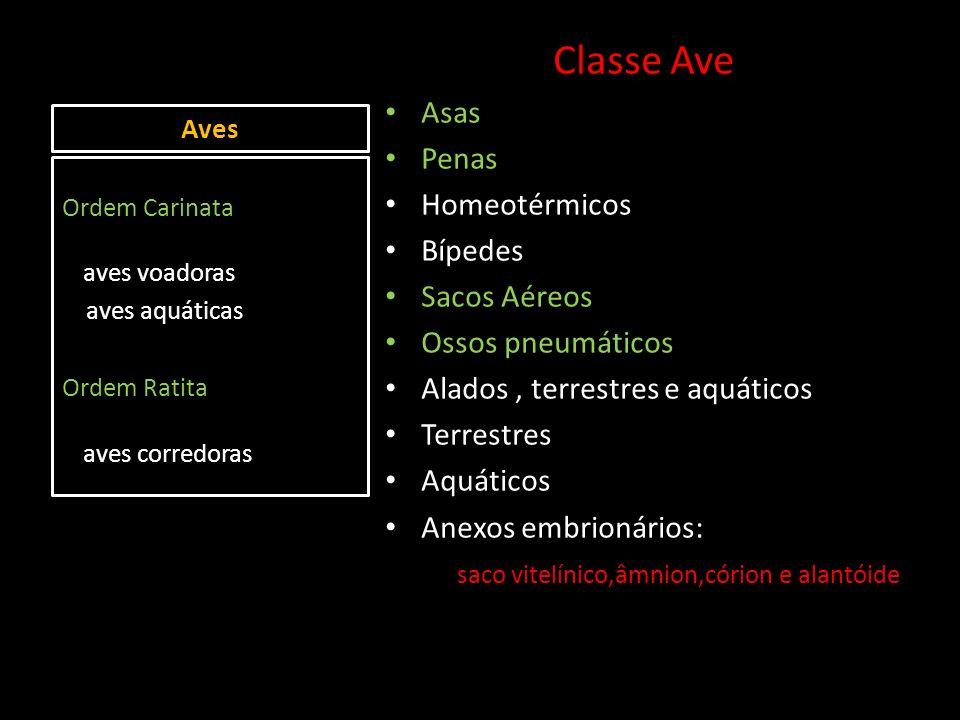 Aves Classe Ave Asas Penas Homeotérmicos Bípedes Sacos Aéreos Ossos pneumáticos Alados, terrestres e aquáticos Terrestres Aquáticos Anexos embrionário