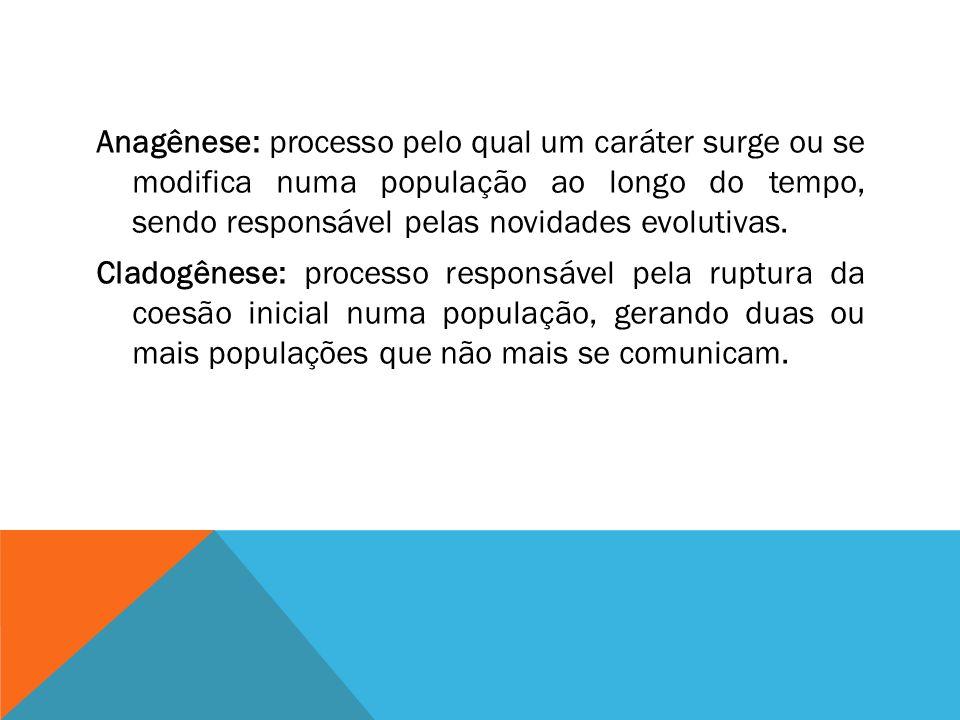 Anagênese: processo pelo qual um caráter surge ou se modifica numa população ao longo do tempo, sendo responsável pelas novidades evolutivas.