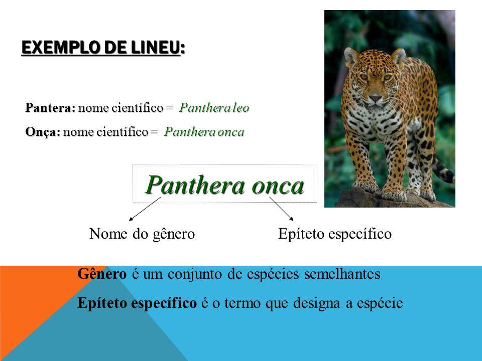 EXEMPLO DE LINEU: Pantera: nome científico = Panthera leo Onça: nome científico = Panthera onca Panthera onca Nome do gêneroEpíteto específico Gênero é um conjunto de espécies semelhantes Epíteto específico é o termo que designa a espécie