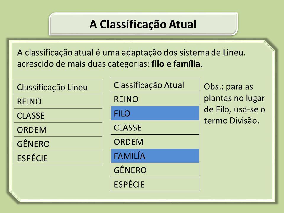 A classificação atual é uma adaptação dos sistema de Lineu. acrescido de mais duas categorias: filo e família. Obs.: para as plantas no lugar de Filo,