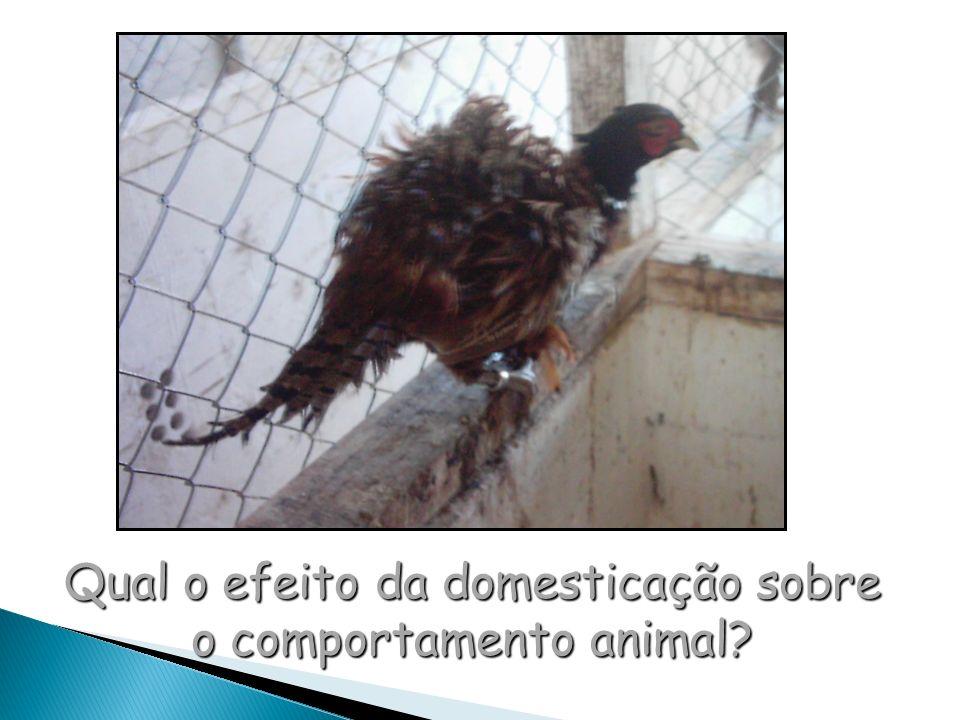 Qual o efeito da domesticação sobre o comportamento animal?