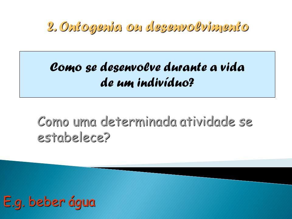 2. Ontogenia ou desenvolvimento Como se desenvolve durante a vida de um indivíduo? Como uma determinada atividade se estabelece? E.g. beber água