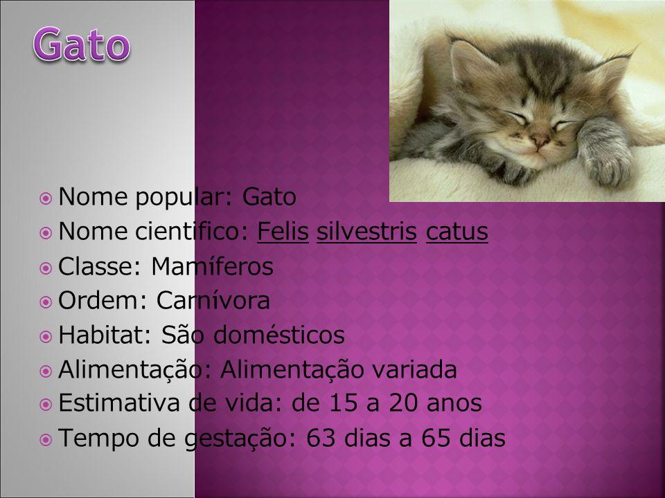 Nome popular: Gato Nome cientifico: Felis silvestris catus Classe: Mam í feros Ordem: Carn í vora Habitat: São dom é sticos Alimenta ç ão: Alimenta ç