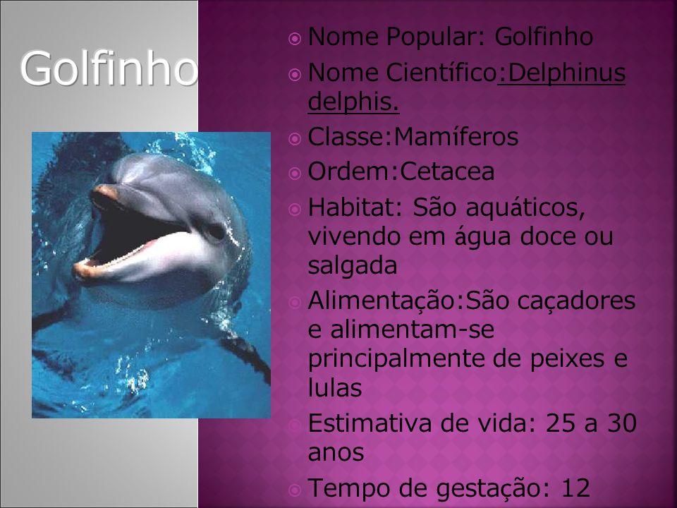 Nome Popular: Golfinho Nome Cient í fico:Delphinus delphis. Classe:Mam í feros Ordem:Cetacea Habitat: São aqu á ticos, vivendo em á gua doce ou salgad