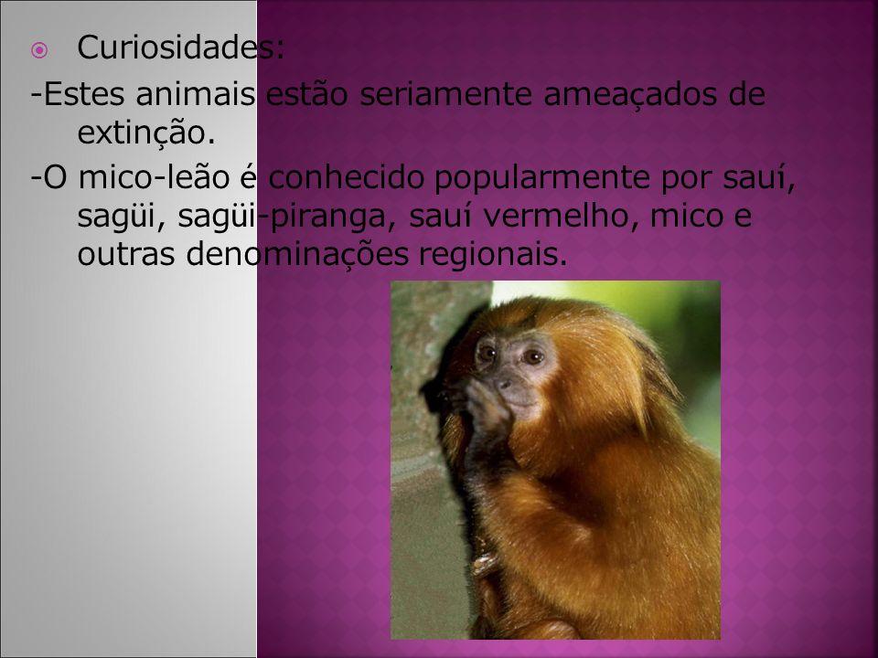 Curiosidades: -Estes animais estão seriamente amea ç ados de extin ç ão. -O mico-leão é conhecido popularmente por sau í, sag ü i, sag ü i-piranga, sa