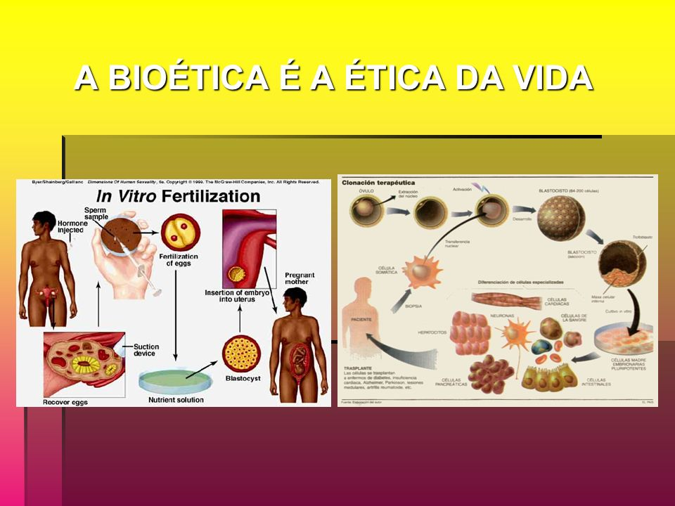 A BIOÉTICA É A ÉTICA DA VIDA A BIOÉTICA É A ÉTICA DA VIDA