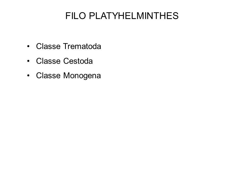 FILO PLATYHELMINTHES Classe Trematoda Classe Cestoda Classe Monogena