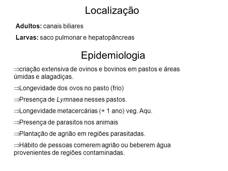 Adultos: canais biliares Larvas: saco pulmonar e hepatopâncreas Localização Epidemiologia criação extensiva de ovinos e bovinos em pastos e áreas úmid