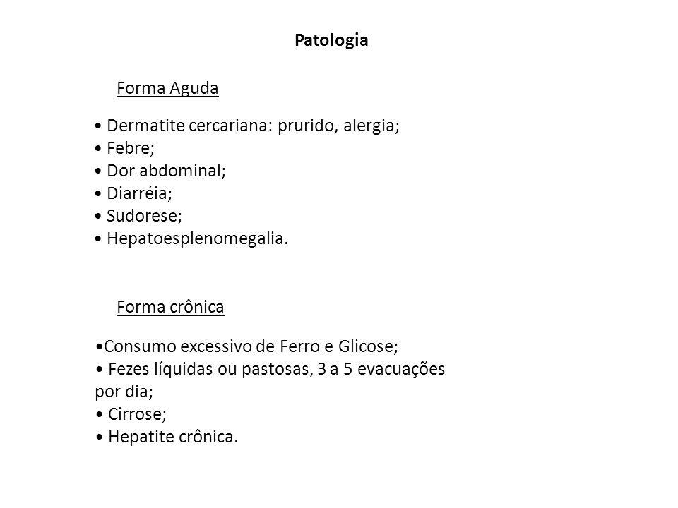 Patologia Dermatite cercariana: prurido, alergia; Febre; Dor abdominal; Diarréia; Sudorese; Hepatoesplenomegalia. Forma Aguda Forma crônica Consumo ex