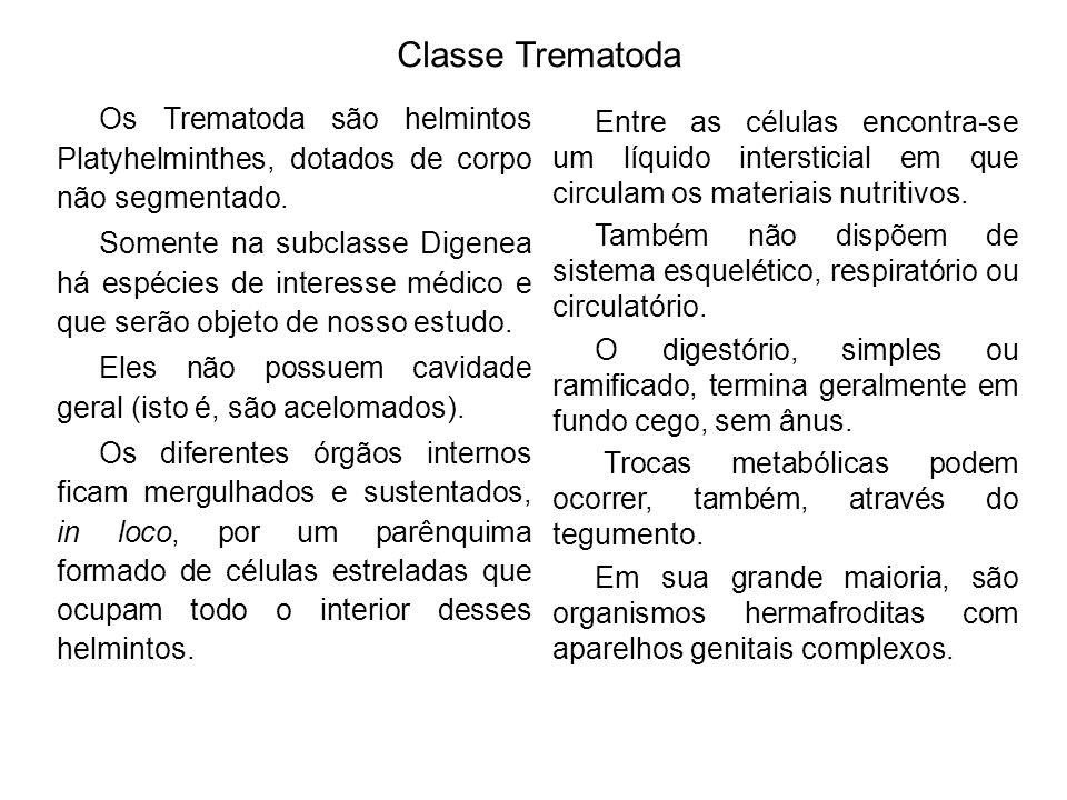 Classe Trematoda Os Trematoda são helmintos Platyhelminthes, dotados de corpo não segmentado. Somente na subclasse Digenea há espécies de interesse mé