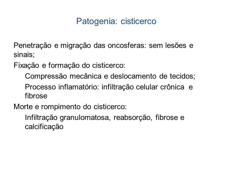 Patogenia: cisticerco Penetração e migração das oncosferas: sem lesões e sinais; Fixação e formação do cisticerco: Compressão mecânica e deslocamento