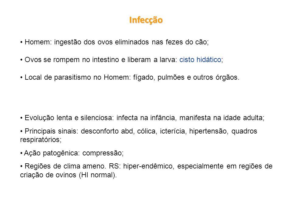 Infecção Homem: ingestão dos ovos eliminados nas fezes do cão; Ovos se rompem no intestino e liberam a larva: cisto hidático; Local de parasitismo no