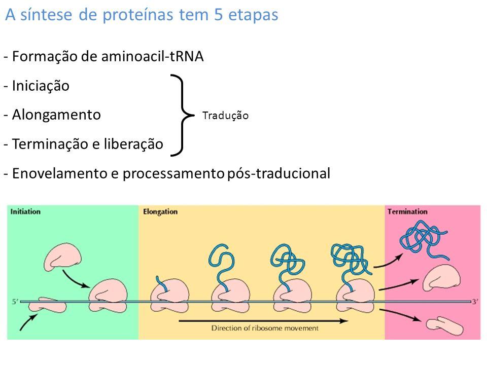 A síntese de proteínas tem 5 etapas - Formação de aminoacil-tRNA - Iniciação - Alongamento - Terminação e liberação - Enovelamento e processamento pós