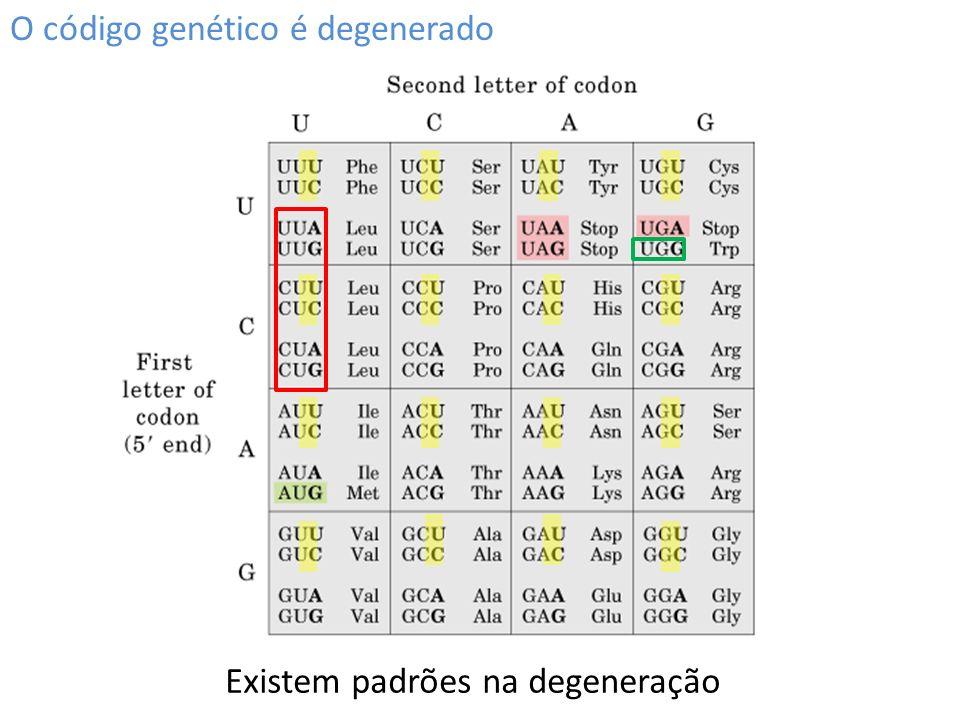 O código genético é degenerado Existem padrões na degeneração