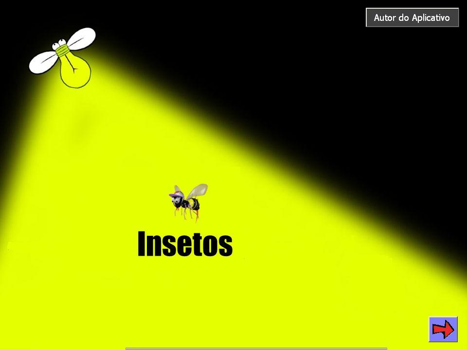 O que são insetos.