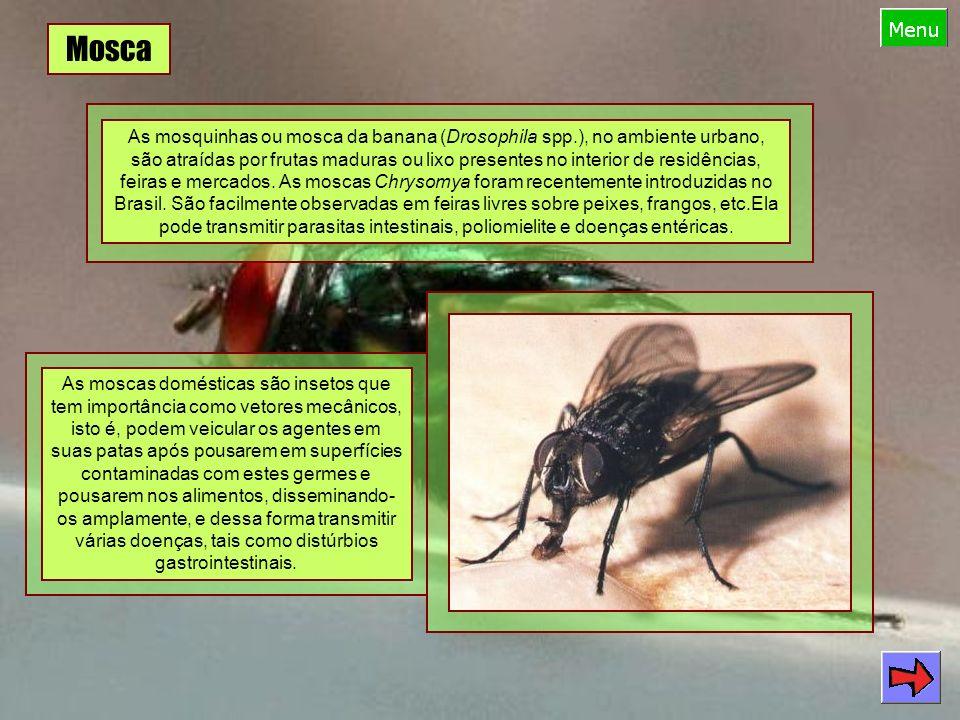 Mosca As mosquinhas ou mosca da banana (Drosophila spp.), no ambiente urbano, são atraídas por frutas maduras ou lixo presentes no interior de residências, feiras e mercados.