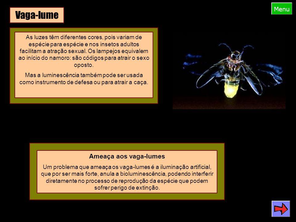 Vaga-lume As luzes têm diferentes cores, pois variam de espécie para espécie e nos insetos adultos facilitam a atração sexual.